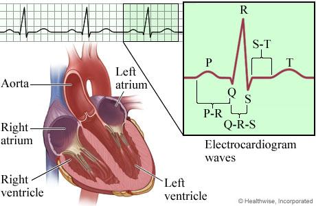 The electocardiogram