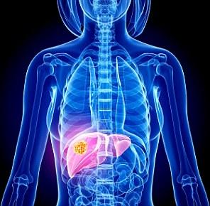 liver-part-2