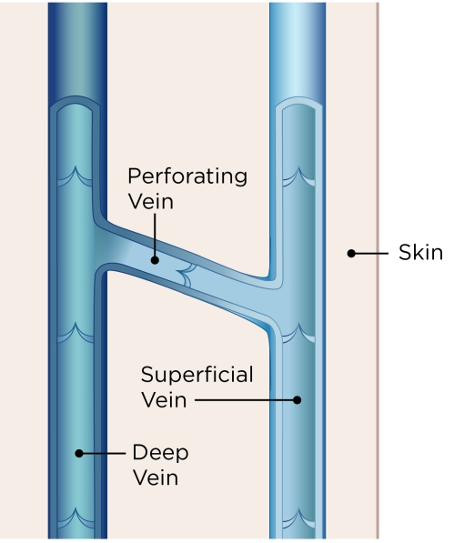 vascular-27-veins_illustration
