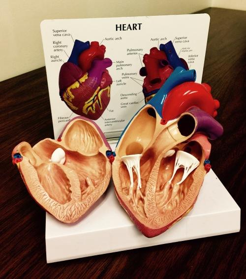 HEART MODLE